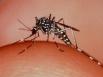 Qld scientists discover quick dengue test
