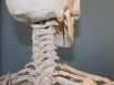 Calls for chiropractic board to be sacked
