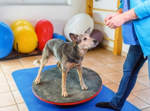 Animal physiotherapy a rapidly growing profession
