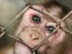 Secret experiments on primates: report