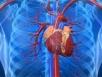 Whole grains lower heart disease risk